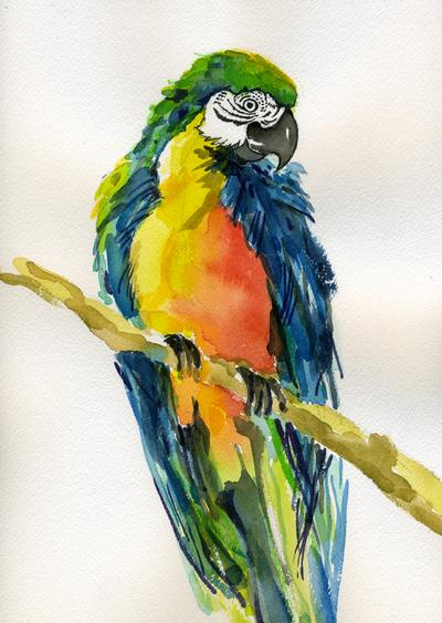 Robbi Muir - Multicolored Parrot